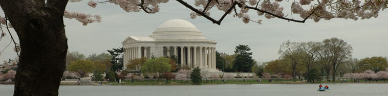 This is a view of the Jefferson Memorial at cherry blossem time.